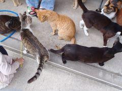 御誕生寺で猫まみれ!