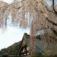 12年春、家族で「船山温泉」さんへ泊まろう!