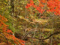 紅葉を求めて~再び裏磐梯へ