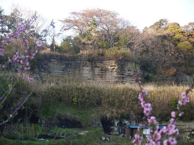 鎌倉界隈は凝灰質粗粒砂岩と呼ばれる岩盤からできている。鎌倉時代以降に、谷戸を切開いて寺社や武家屋敷を造成する際や、切通を掘削する際にこの岩盤から石が切り出されて利用された。柔らかいく細工しやすいので、寺社の石段や多層塔、石燈籠など、様々な用途に用いられた。柔らかいために磨り減りやすく、寺社の石段などには磨り減ってしまっているものも多く見られ、月日の長さを偲ばせてくれる。<br /> こうした石は鎌倉石(かまくらいし)と呼ばれている。その後も、鎌倉市や藤沢市では鎌倉時代から昭和初期まで鎌倉石が採掘された。<br /> 鎌倉石を切り出した石切場は鎌倉界隈の至る所に見られる。谷戸の寺社の崖ややぐらが見られる場所は大抵は鎌倉石を切り出した跡であろう。<br /> 鎌倉界隈で鎌倉石の石切場として知られている場所は大切岸、天園ハイキングコースの胡桃山下(大江広元墓下)、十王岩横、明月谷入口、衣張山山頂下、朝夷奈切通峠付近、光蝕寺奥の墓地脇などがある。また、報国寺奥の谷戸や金剛窟地蔵尊が祀られている巡礼古道のあたりにも石切場があったのであろう。大仏坂切通のやぐらの見られる崖も石切場跡であろうか。<br />(表紙写真は大切岸の鎌倉石石切場跡)