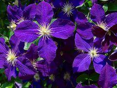 花菜ガーデン① 園内の風景と花達①