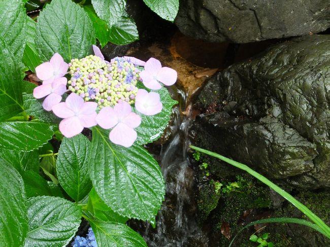 雨の日のアジサイはひと際美しいかも。<br />そんな感じで藤森神社に行ってみました。
