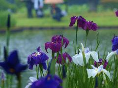 雨の降る三溪園に咲く花たちー3