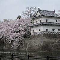 まだまだ桜が満開の新潟新発田