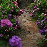 愛知 本光寺と形原温泉の紫陽花
