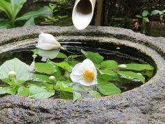2012年初夏 沙羅の花をもとめて藤戸まで