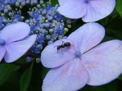 梅雨の合間に修善寺へ★「竹林の小径」散策で出会ったお花&虫たち