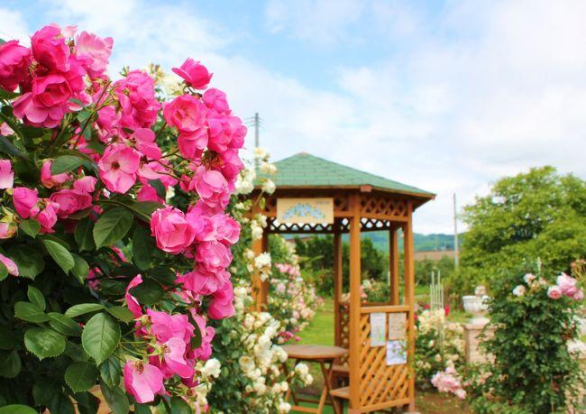 """地元の情報番組で""""福島市内の梨園でバラの花が見頃です""""という特集をしていたよ♪<br /><br />""""梨園でバラ~?♪""""<br />ちょうど良い季節だからどこかに行きたいな~と思っていたところだったし…そうだ、お花大好きな母を連れて行ってあげよう♪<br /><br />サプライズ!にしたかったけど、つい「ねえねえ知ってる?梨園でね…」と母に話をしたら…もちろんく食いついた母。<br />""""思い立ったが吉日~♪""""…と、いきたかったのですがなかなか母と私の都合がつかず、そうこうしているうちにも花の見頃は過ぎて行く~っ<br /><br />そんなある日…<br />父と出かけて帰宅した母から耳を疑う一言が…<br /><br />「バラ見てきたよ~♪」<br /><br />信じられない…抜駆けされた…(T_T)<br /><br /><br />一緒に行こうとタイミングを待ってたのに~っ、もう誘ってあげないからね(-&quot;-)…とりあえず一人でバラ見に行くぞ~っ!<br /><br />そんな矢先、追い打ちをかけるように嵐が~っ!!<br />ついてないよ~っ<br /><br />すごい雨&強風の夜から一夜明け…<br />きっと農園の地面はびちゃびちゃだろうけど、晴れ間も出たし、きっとバラももう終わりだろうし…<br />傷心のちゃむた、最後のチャンス!さぁ、出かけますよっ<br /><br /><br />気を取り直して…目指すは萱場梨(かやばなし)生産が盛んな福島市下野寺。『佐藤梨園』さんを目指しま~す!<br /><br /><br />"""