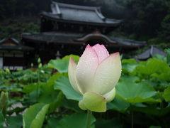 2012年 奈良と京都のあじさい(その2)