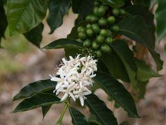 2012年 ハワイ島旅行記 1:コナ・コーヒーはお好きですか?