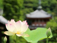 京都を歩く(125) 梅雨の晴れ間に… 蓮が見頃を迎えた三室戸寺へ