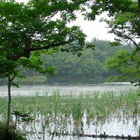 夏の北海道に行ってきました☆゚+。(2日目)