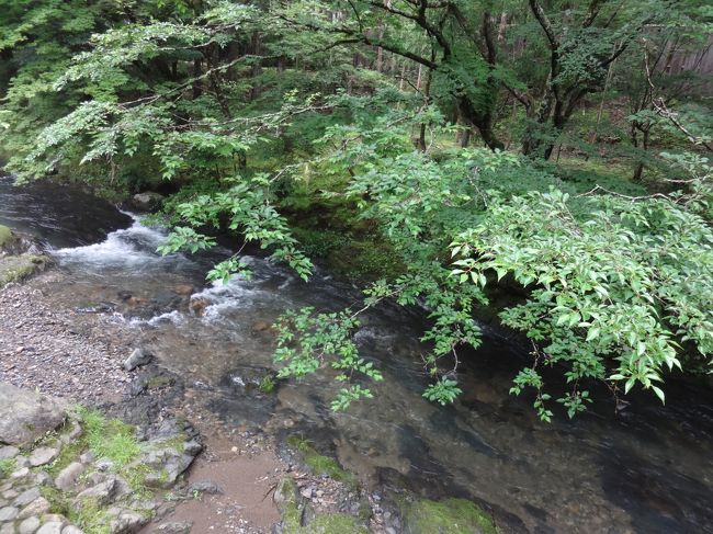 5年ぶりの美山荘は変わらず素晴らしかった。<br /><br /><br />2007年まで毎年楽しみにしていた京都旅行。<br />2008年に一代目フェレットのおむ1stの闘病のため、予約をキャンセル。<br />おむ1stを亡くした後は相棒のつぶ1stの健康最優先のため、部屋数が少なく数ヶ月先の予約しか出来ないこの宿から遠のいていた。<br />2012年1月、ニンゲンなら90歳と言うご長寿をまっとうしてくれたつぶ1stを看取って、5年ぶりの予約を入れた美山荘。<br />季節はやっぱり一番好きな蛍の季節。