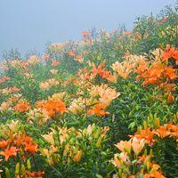 天空の花園と雲上の花畑 in Siga