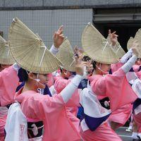 第55回東京高円寺阿波おどり  〜迫力の踊りは本場の雰囲気がそのままです