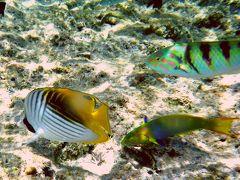 沖縄の離島に-----宝石のような無人島が浮かぶ---