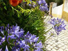 優雅なポルトガル旅・憧れのマデイラ島でバカンス♪ Vol43(第4日目午前) ☆オビドス:美しい花で彩られたオビドスを眺めて♪