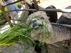2012 GW ペルー旅行09:インカの聖なる谷巡り