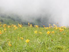 2012夏の花旅:(その2)霧ヶ峰高原八島湿原