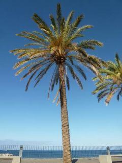 優雅なポルトガル旅・憧れのマデイラ島でバカンス♪ Vol75(第7日目午前) ☆マデイラ島リベイラ・ブラヴァ:「Ribeira Brava」の街並みと美しい海岸を歩いて♪