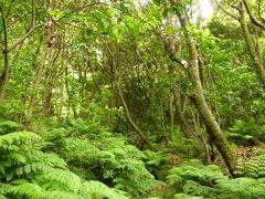 優雅なポルトガル旅・憧れのマデイラ島でバカンス♪ Vol79(第7日目午後) ☆マデイラ島セイザル:「Seixal」の世界遺産「月桂樹林」の中を優雅に歩く♪