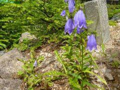 2012年 浅間高原の優雅な避暑ライフ♪ Vol7 ☆高峰高原の美しい高山植物を愛でる♪