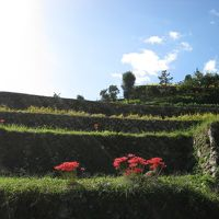 2009 岩座神の棚田でおしゃれな案山子に睨まれる