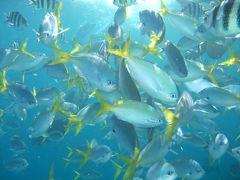 ダイビングとイルカとコウモリスープのパラオ旅行♪宿泊はパラオ・ロイヤル・リゾート(・ω・)/♪