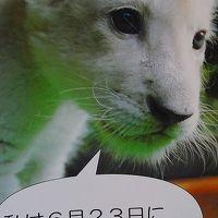 伊豆アニマルキングダム(1)・・・ホワイトライオンのお食事タイム見学。