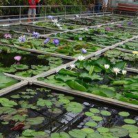 熱川ワニバナナ園(3)・・・最後は本園の植物園(1) 睡蓮の図鑑