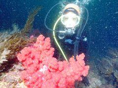 (追記あり)留学中!思い立って一人チェジュ島ダイビング旅行