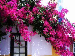 Wedding Present Town -Obidos-