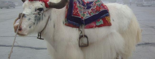 青海チベット鉄道の旅・・・青海湖のクルーズ