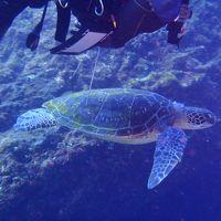 2012,8月、八丈島 ダイビング2日目 ウミガメ天国 八丈ビューホテル