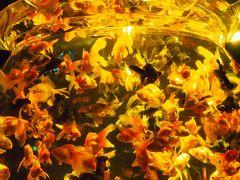 アートになった金魚たちの織りなす世界は、妖艶で幻想的だった~!