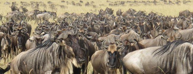 東アフリカ周遊(12)【ケニア:マサイマ...