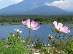 夏休みは富士五湖めぐり 富士山巡りです!