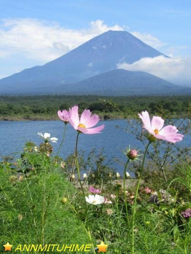 横浜に住んでいますが、富士山がよく見えます。<br />これって、すごく贅沢。<br />でも、もっと近くで富士山を見てみたいから…って、<br />今年の夏休みの旅行は「富士五湖巡り」にしてみました。<br /><br />河口湖・山中湖・本栖湖・西湖・精進湖<br />富士山は、どのように見えるでしょう。<br /><br />箱根にはよく行っていましたが、富士五湖に1回しか行っていません。<br />しかも、そのときは梅雨時で富士山が見えなかったのです。。。<br /><br />夏のお盆の頃は暑いけれども、富士山が見える時ってありますよね。<br />雪をかぶっていない富士山の姿。<br />こういう景色もきっとステキでしょうね。<br /><br />そして今回は、富士五湖ひとつひとつをぐるりと車で一周して、<br />湖のようすも楽しん来ましょう。<br /><br />