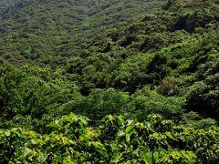 屋久島-6 西部林道、歩いて世界遺産地域を実感 ☆照葉樹の森は豊か