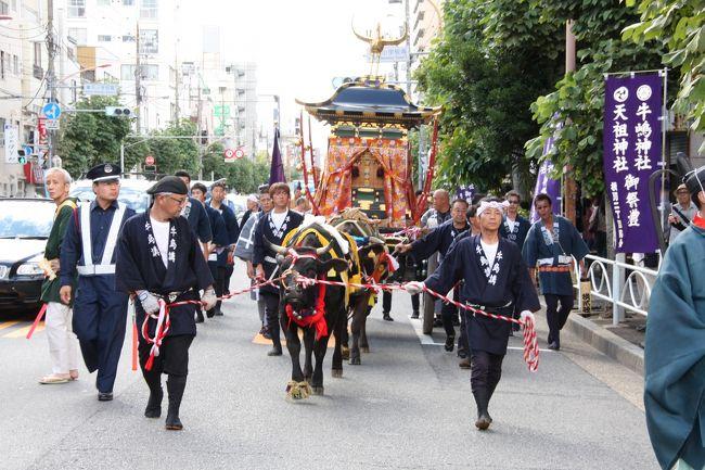東京スカイツリーからほど近い墨田公園に隣接する牛嶋神社、今年は鎮座1155年にあたるそうで、5年に一度の大祭が行われました。<br />暑い中、牛が引く鳳輦(ほうれん)渡御を見に出掛けました。<br /><br />これまで、鳳輦を引くのは福島県南相馬市で「神牛」として特別に訓練を受けた牛でしたが、昨年三月の原発事故で飼育農家が被災したため、今年初めて、京都の葵祭で活躍している牛が代役を務めました。<br /><br />牛嶋神社の祭礼は、古くは貞観の昔、9月15日にはじめて行われたと言われ、現在は毎年9月、敬老の日に近い土日に行われています。<br />今年は、14日(金)、15日(土)に神幸祭 鳳輦渡御、16(日)に各町大神輿連合宮入渡御が行われました。 <br />