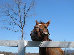 北海道の春は遅かった【2日目.お馬の親子はなかよしこよし】