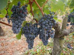 フランスワインを求めて超美食旅!!!!!トランジットでバンコクも☆