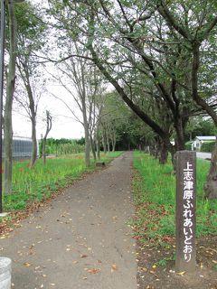 佐倉市散策(33)・・上志津原ふれあいどおりを訪ねます。