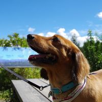 愛犬と初旅行で八ヶ岳♪U・x・U