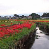 湘南のレッドカーペット 全長3km 小出川彼岸花