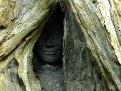 【カンボジア旅行記 2012】その7 タ・プロームで植物の生命力を実感編