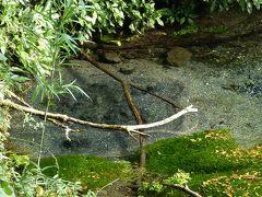 三島市内散策と柿田川湧水群