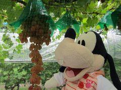 グーちゃん、秋の本合宿で石和温泉へ行く!(ワイナリーはいいな!編)