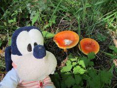 グーちゃん、秋の本合宿で富士五湖へ行く!(西湖の蝙蝠穴とマツタケ!編)