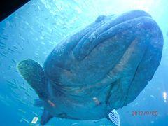 洞窟カフェとアジア最大の水族館Aqua planet jeju(チェジュ③)